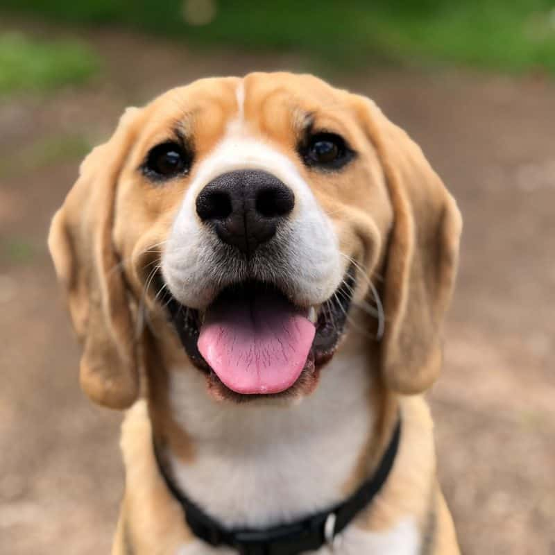 Knowle Dog Training Club – See you soon.
